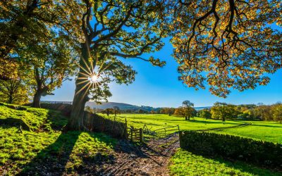 Achtsamkeit im Alltag: Übung 3 – Die Morgenübung